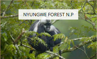 Nyungwe Forest National Park - Leisure Facilities - Hotels, Restaurants and Leisure - Consumer Services - Consumer Discretionary - Easy Price Book Rwanda