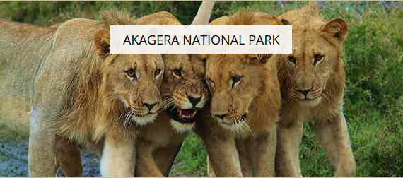 Akagera National Park - Leisure Facilities - Hotels, Restaurants and Leisure - Consumer Services - Consumer Discretionary - Easy Price Book Rwanda